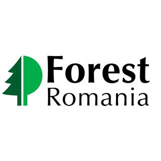 Forest Romania 2019